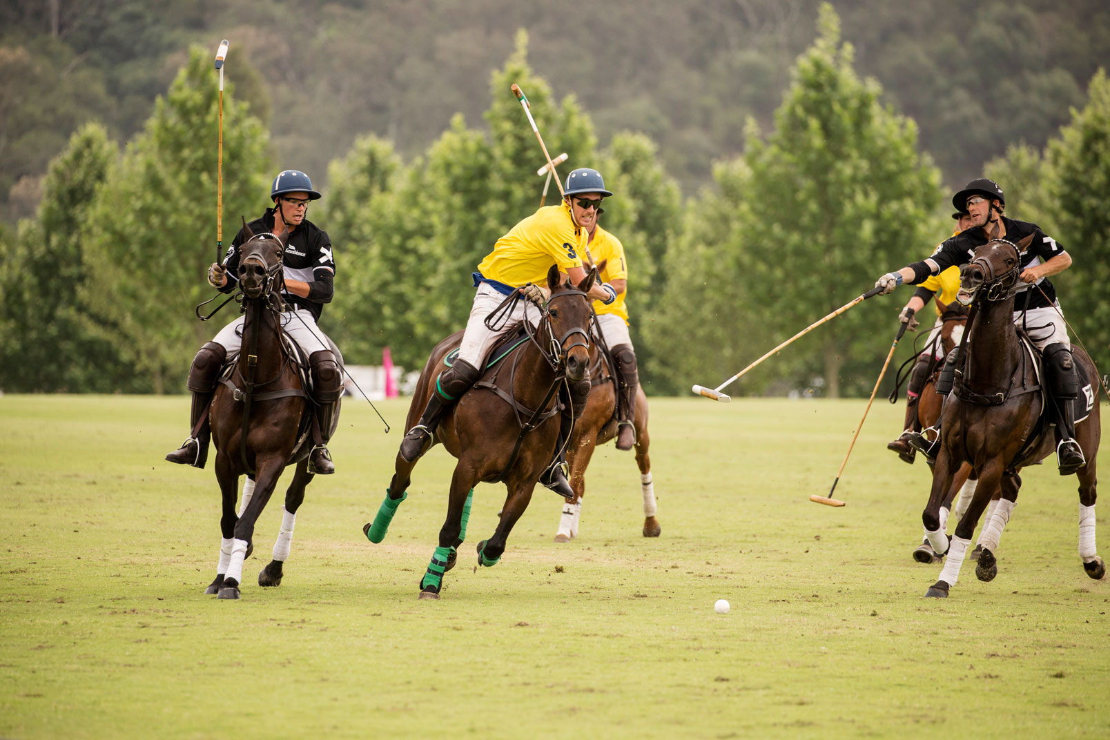 The Gold Cup at Sydney Polo Club